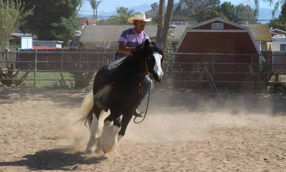 Horseman Buddy Liblin