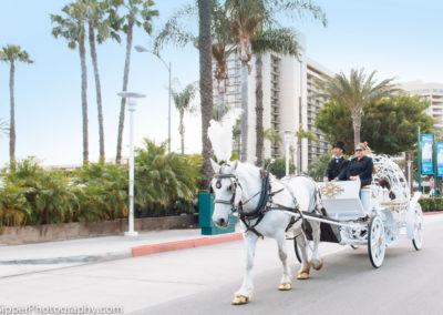 Disneyland Horse Carriage Rental