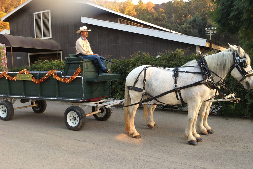 Hay Ride Wagon
