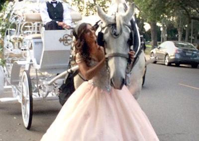 Quinc Cinderella Carriage Horse