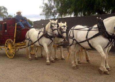Stagecoach rentals